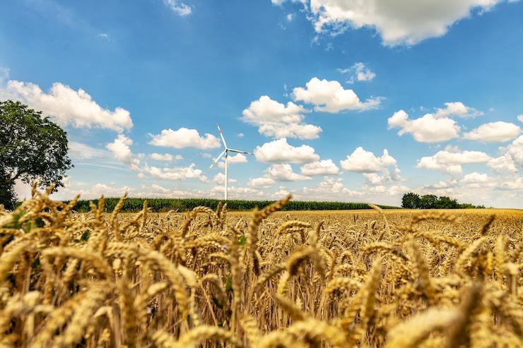 Weizenfeld mit blauem Himmel Windrad